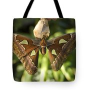 An Atlas Moth Atlas Attacus At The St Tote Bag