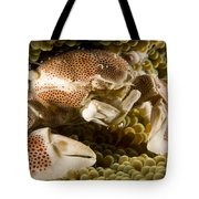 Anemone Or Porcelain Crab In Its Host Tote Bag