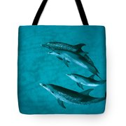 Atlantic Spotted Dolphins Tote Bag