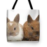 Baby Rabbits Tote Bag