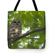 Barred Owl Tote Bag