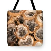 Birds Nest Fungus Tote Bag