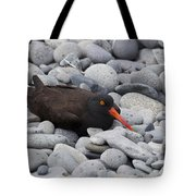 Black Oystercatcher Haematopus Bachmani Tote Bag