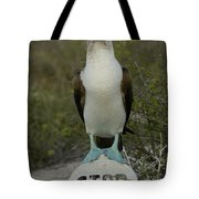 Blue-footed Booby Sula Nebouxii Tote Bag