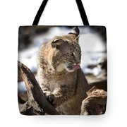 Bobcat Tote Bag by Jeff Grabert