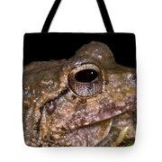 Bobs Robber Frog Tote Bag