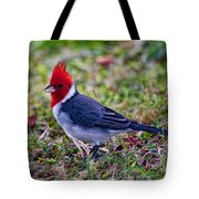 Brazillian Red-capped Cardinal Tote Bag