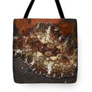 Brown And White Discodoris Nudibranch Tote Bag