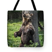 Brown Bear Itch Tote Bag