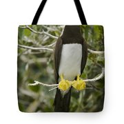 Brown Booby, Sula Leucogaster Tote Bag