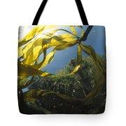 Bull Kelp Underwater Clayoquot Sound Tote Bag