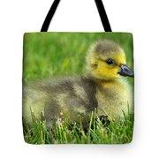 Canada Gosling Tote Bag