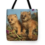 Canadian Lynx Kittens, Alaska Tote Bag