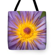 Cape Blue Waterlily Nymphaea Capensis Tote Bag