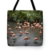 Caribbean Flamingos At The Zoo Tote Bag