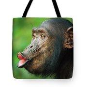 Chimpanzee Pan Troglodytes Adult Female Tote Bag