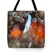 Cinnamon Clownfish In Its Host Anemone Tote Bag