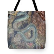 Clam Worm Tote Bag