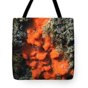 Close-up Of Live Sponge Tote Bag by Ted Kinsman