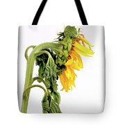 Close Up Of Sunflower. Tote Bag