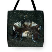 Coconut Octopus In Shell, North Tote Bag