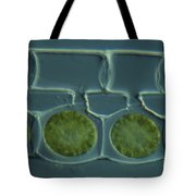 Conjugation In Spirogyra Algae Lm Tote Bag