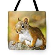 Cute Red Squirrel Closeup Tote Bag