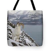 Dall Sheep Ovis Dalli Ram, Yukon Tote Bag