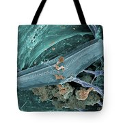 Diatom With Thermophilic Bacteria Tote Bag by Ted Kinsman