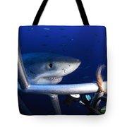 Female Great White Shark, Guadalupe Tote Bag