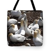 Gannet Birds Showing Fencing Behavior Tote Bag