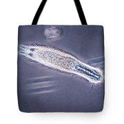 Gastrotrich Tote Bag