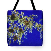 Germinating Fern Spores Tote Bag