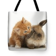 Ginger Kitten And Young Lionhead-lop Tote Bag