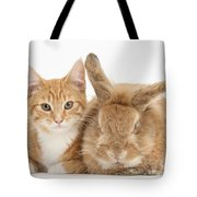 Ginger Kitten With Sandy Lionhead-cross Tote Bag