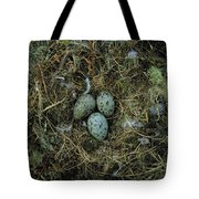 Glaucous-winged Gull Nest With Three Tote Bag