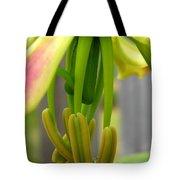 Gloriosa Named Rothschildiana Tote Bag