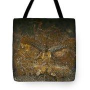 Green Ambon Scorpionfish, North Tote Bag