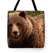 Grizzly Bear, Yukon Tote Bag
