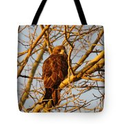 Hawk In A Tree Tote Bag