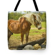 Horse Near Strone Wall In Field Spring Maine Tote Bag