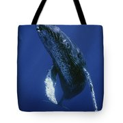 Humpback Whale Singer Maui Hawaii Tote Bag