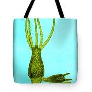 Hydra, Lm Tote Bag