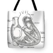 Illustration Of Heart Anatomy Tote Bag