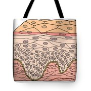 Illustration Of Stratified Squamous Tote Bag