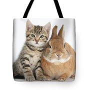 Kitten And Netherland Dwarf-cross Rabbit Tote Bag