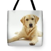 Labrador X Golden Retriever Puppy Tote Bag by Jane Burton