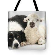 Lamb And Border Collie Tote Bag