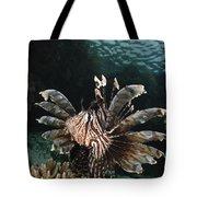 Lionfish, Indonesia Tote Bag