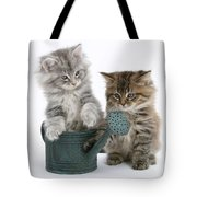 Maine Coon Kitttens Tote Bag